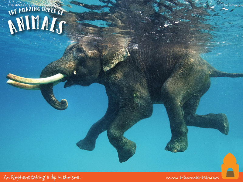 elephant01.png